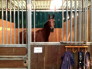 コンテナを使った馬の厩舎 実際に馬が入った様子