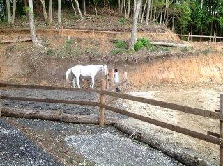 コンテナを使った馬の厩舎 お馬さん