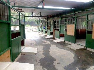 増築されたコンテナの馬の厩舎3
